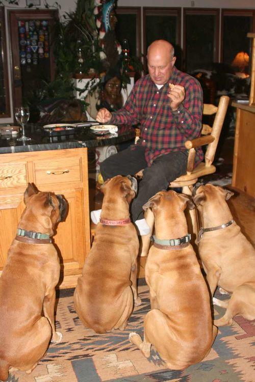 DogsFour