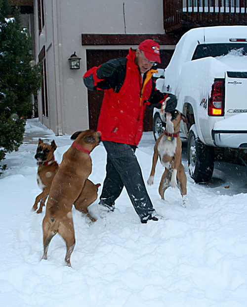 Blizzard_3dogs