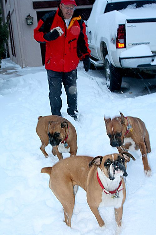 Blizzard_2dogs