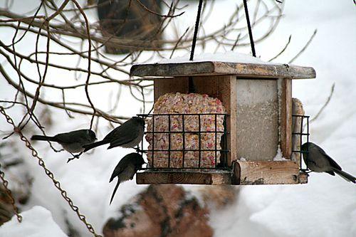 Blizzard_7birds