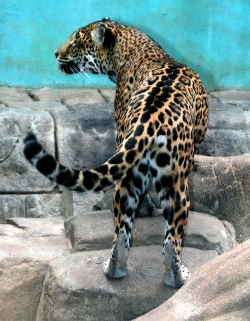 ZooLeopard