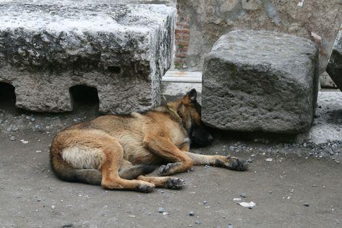 Italy_Pompeii_Dog2