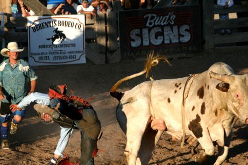 Bull_1i