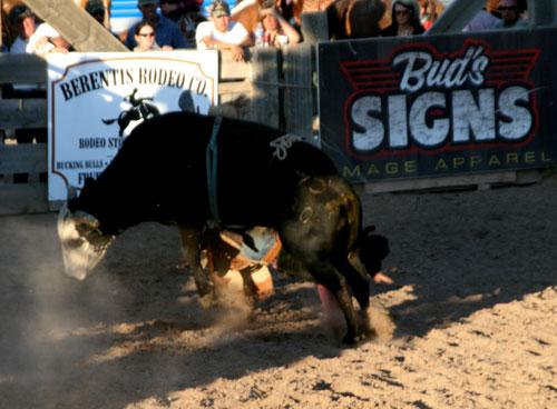 Bull_1j