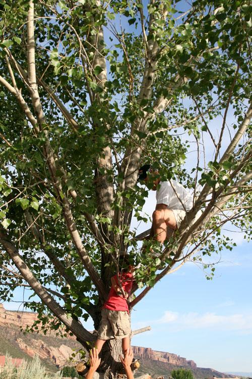 Tree_1d