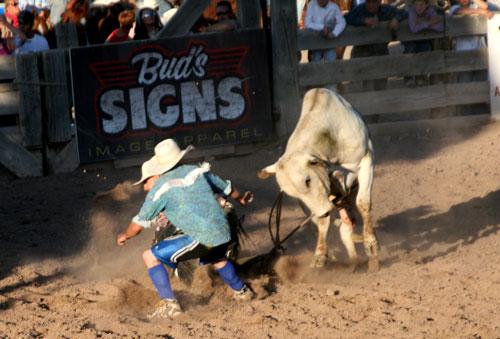 Bull_1b