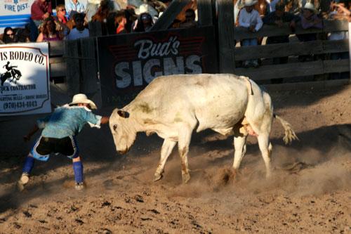 Bull_1d