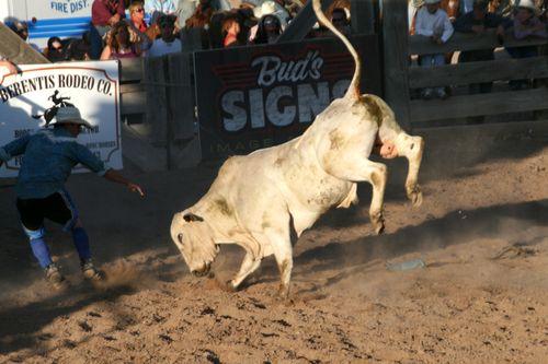 Bull_1e