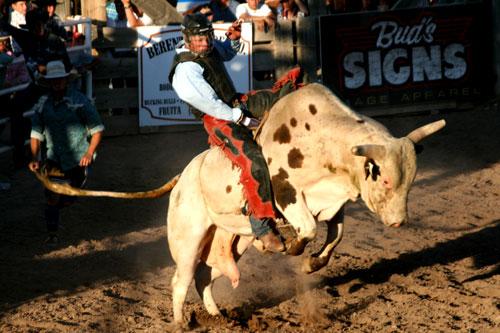 Bull_1h