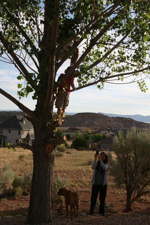Tree_1c