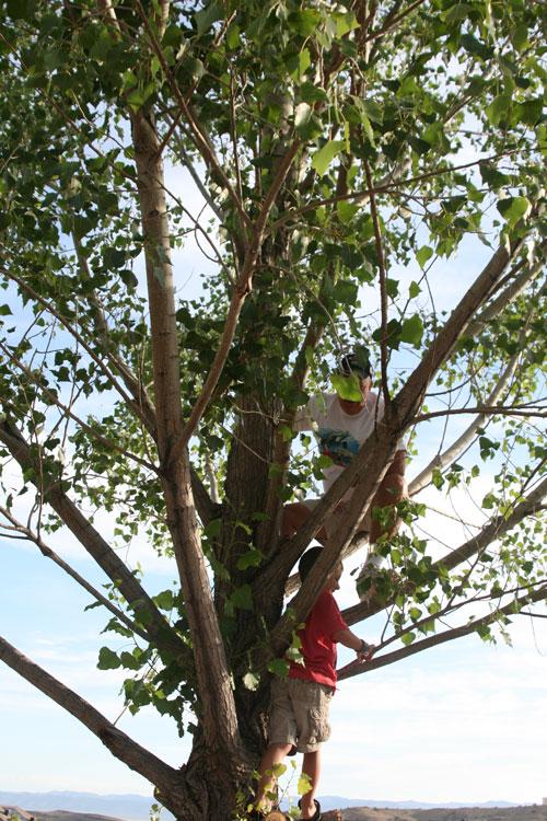 Tree_1f