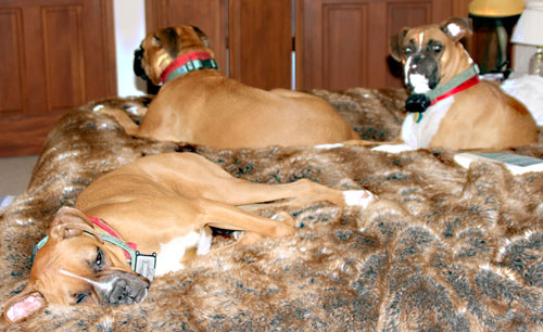 Dogs_1a
