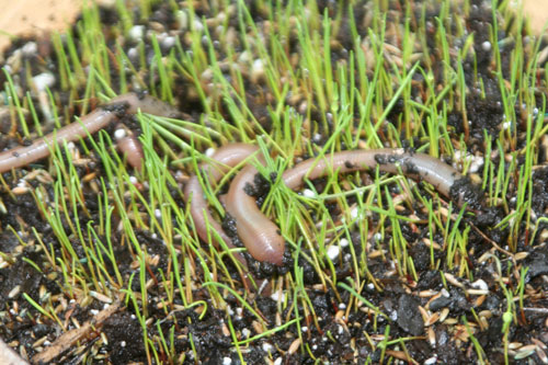 Worms-(12)