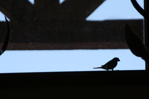 BirdWatch_1b