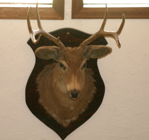 A9b_Deer