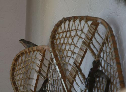 BirdWatch_1c