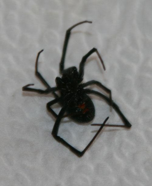 Spider_1a