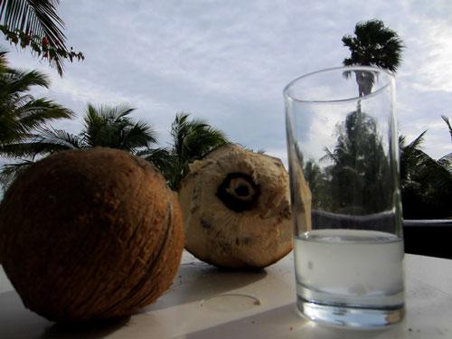 AK_Coconut_1