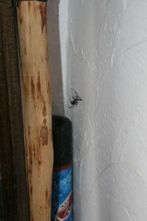 Spider_1j