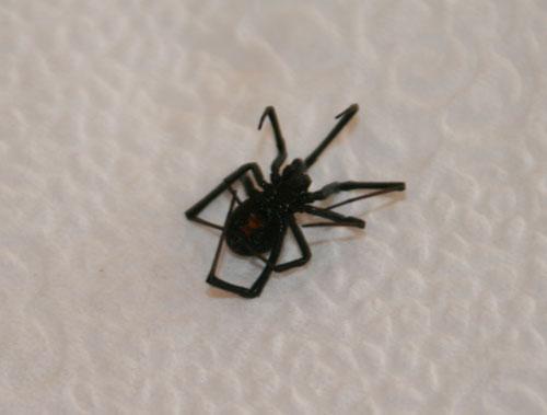 Spider_1b