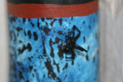 Spider_1c