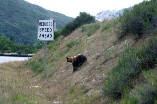 Bear_1f