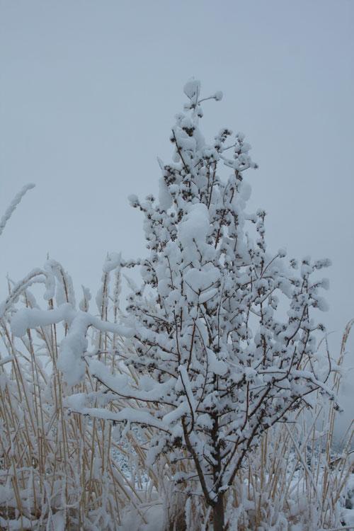 Snow_1k