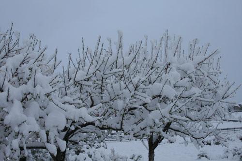 Snow_1e