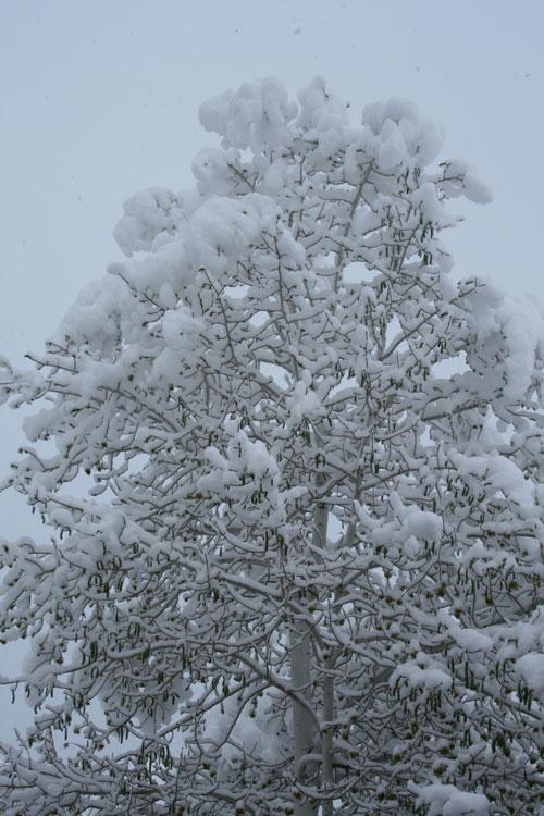 Snow_1p