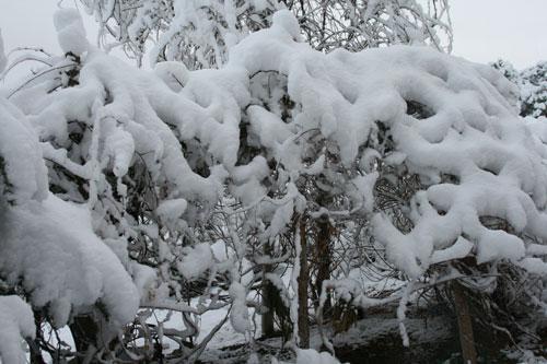 Snow_2h