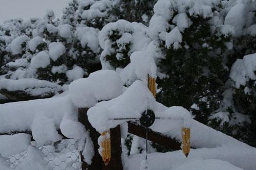 Snow_1v