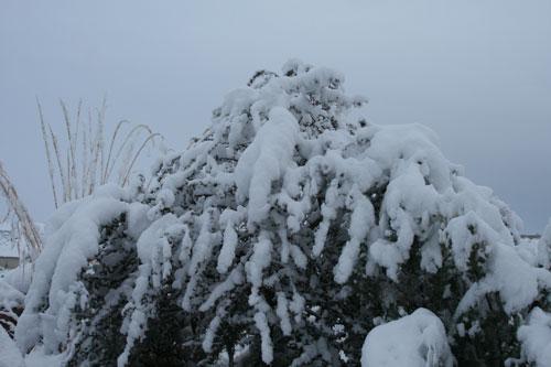 Snow_1j