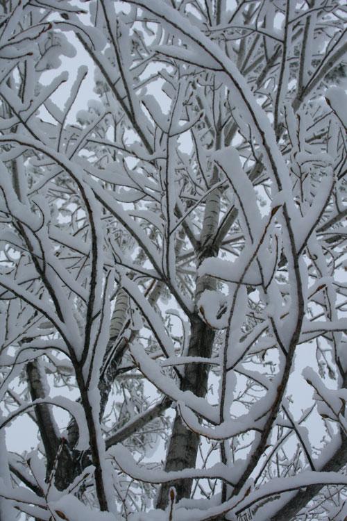 Snow_1d