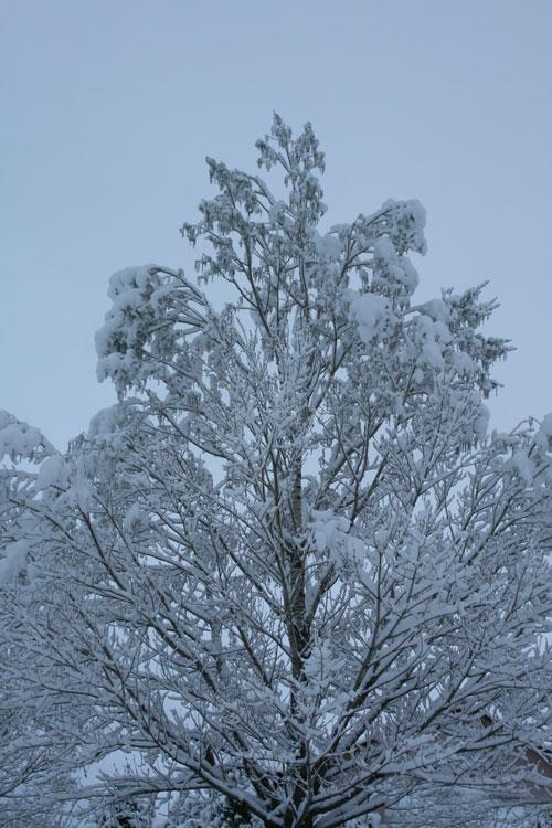 Snow_1n