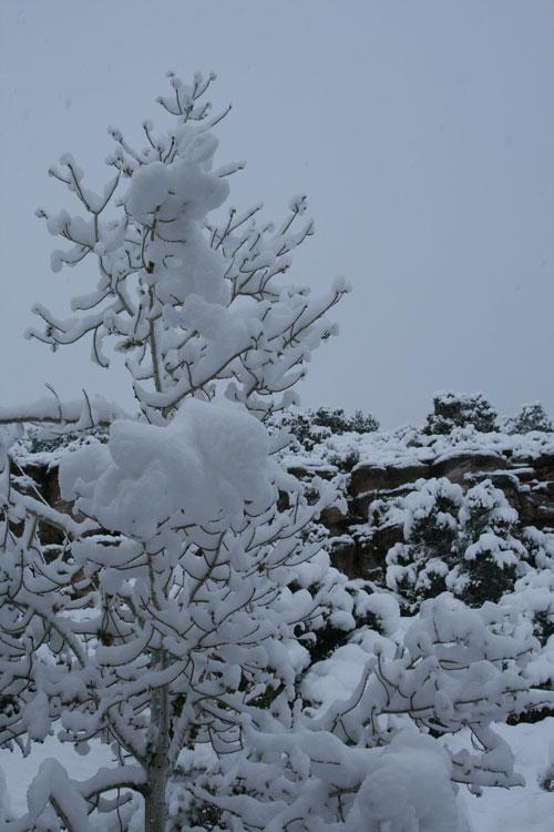 Snow_2s