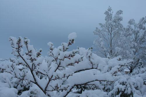 Snow_1m