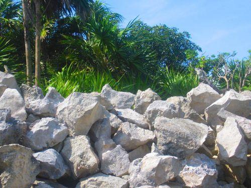 Iguana Walk 037