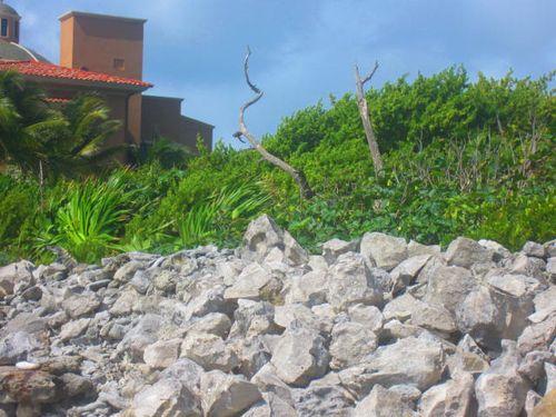 Iguana Walk 103