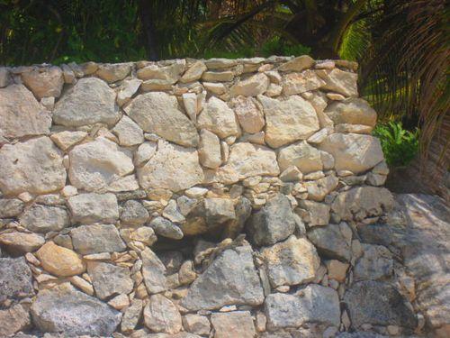 Iguana Walk 155