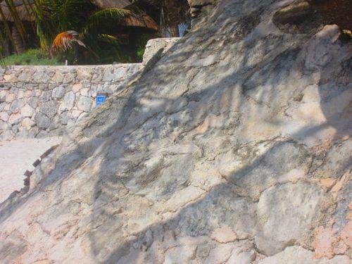 Iguana Walk 020