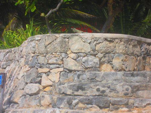 Iguana Walk 023