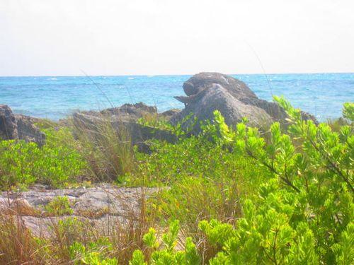 Iguana Walk 090