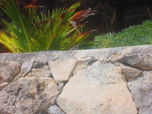 Iguana Walk 030