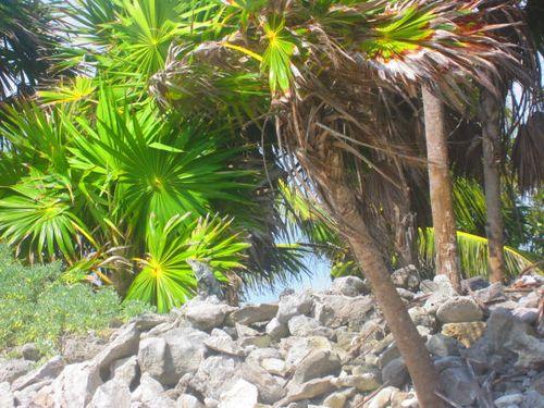 Iguana Walk 099