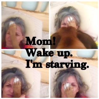 Lola_Wakeup