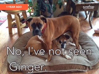 Lola_NotSeenGinger