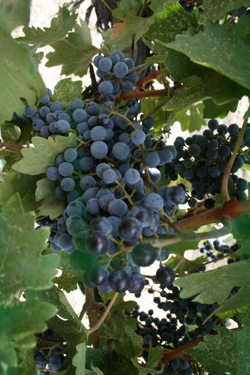 Winefestrandy_kim_071