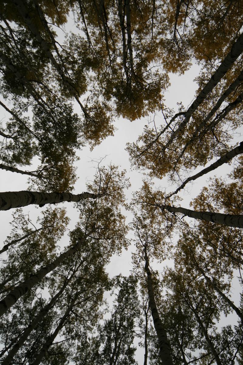 Fall_3_2007_024_2