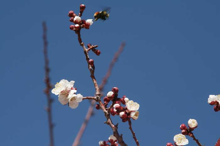 Fruittree4