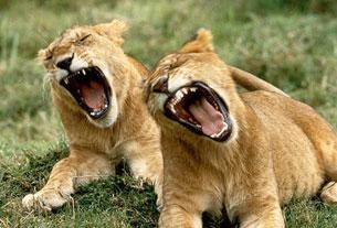 Yawn4